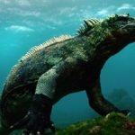 1364898531.Galapagos_a5_H_iguana_v2-via-Colossus-Productions1